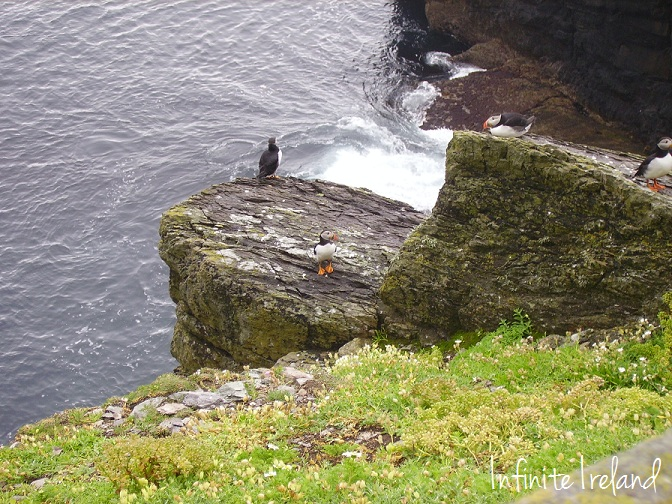 Puffins on Skelligs Co. Kerry
