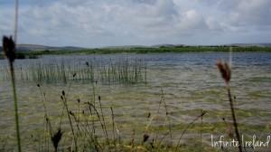 Lough Bunny Reeds