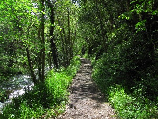 Devil's Glen Walking Path