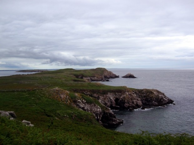 Great Saltee Island from West End