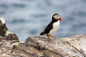 Wet Feet and Wellies: A Day Trip to Great Saltee
