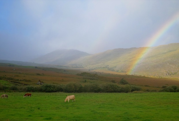 Rainbow and Sheep in Ireland