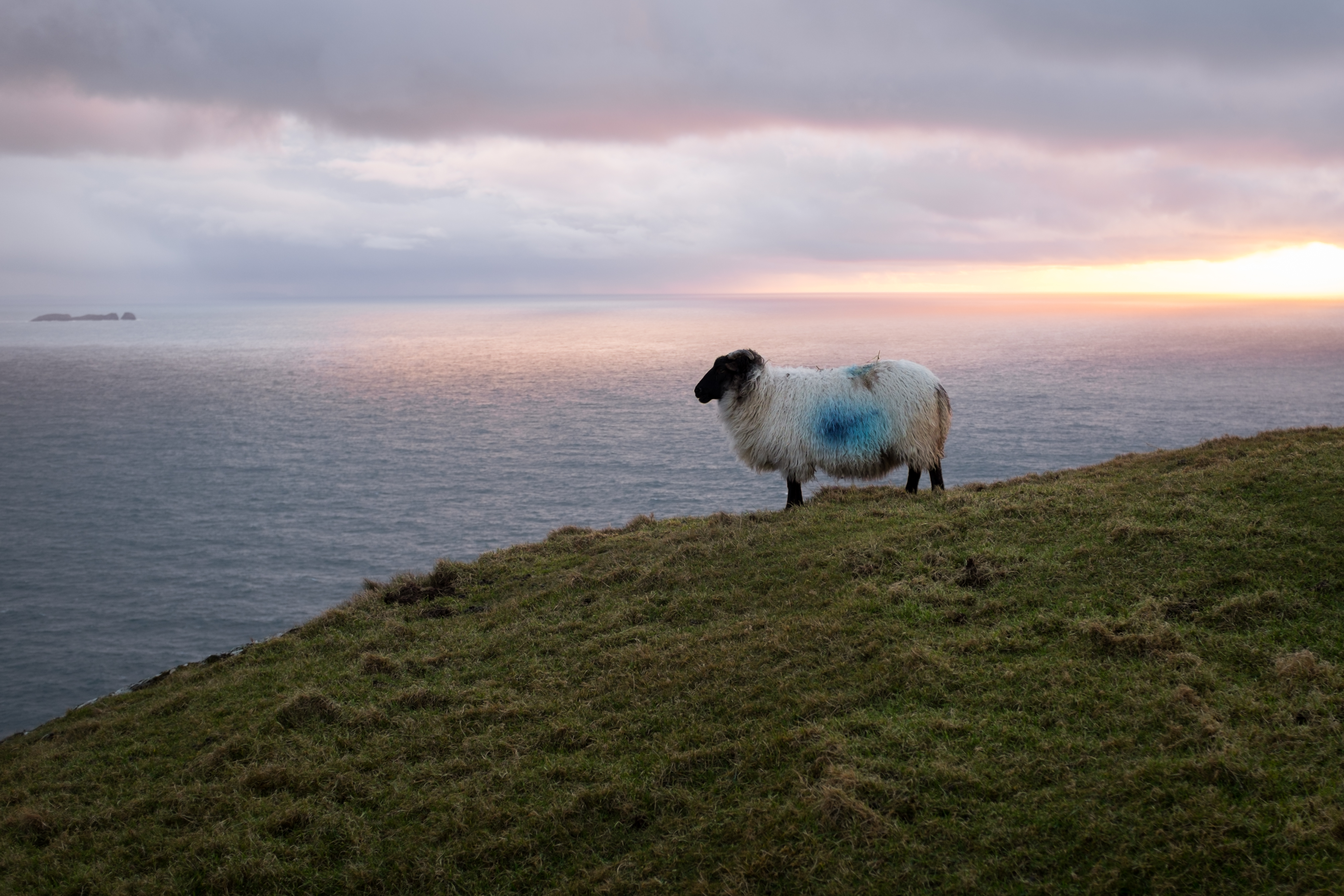 Sheep on Achill Island Ireland Travel Videos