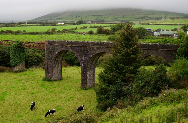 Dingle Train Track and Cows